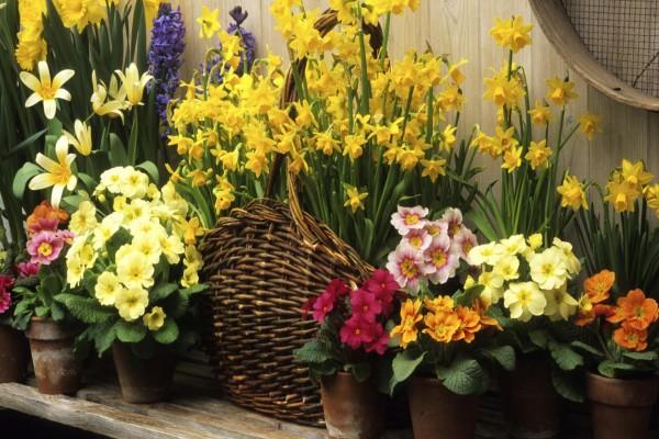 Cestas y macetas con flores