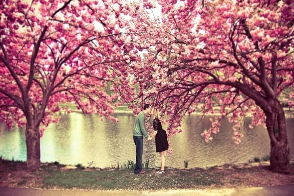 Beso bajo los cerezos