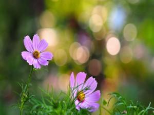 Postal: Flores lila entre la hierba