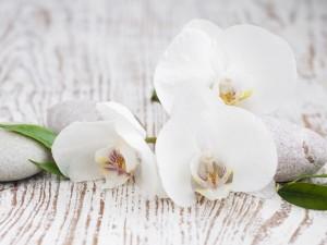 Orquídeas blancas, hojas y piedras