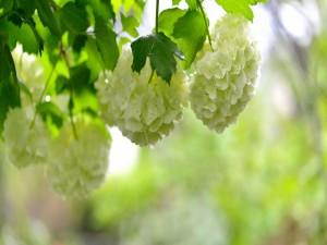 Flores blancas primaverales