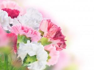 Postal: Claveles blancos y rosas
