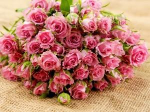 Postal: Gran ramo de rosas rosa