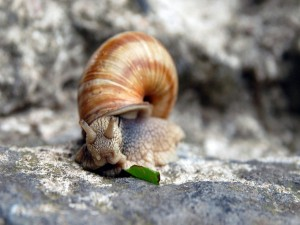 Un caracol en la roca