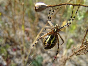 Una gran araña formando la telaraña