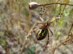 Postal: Una gran araña formando la telaraña
