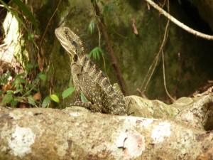 Postal: Un bonito lagarto en las rocas