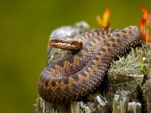 Una preciosa serpiente sobre un tronco