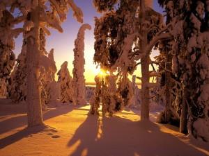 Postal: El sol del atardecer iluminando la nieve