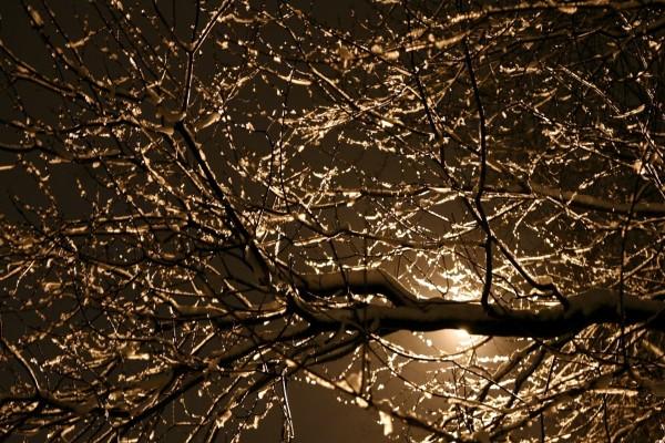 Las ramas de un árbol tapando la luna