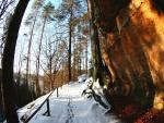 Paseo por el bosque nevado