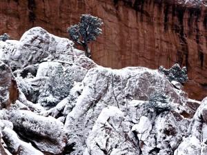 Rocas y árboles con nieve