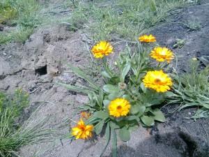 Unas flores en pleno monte