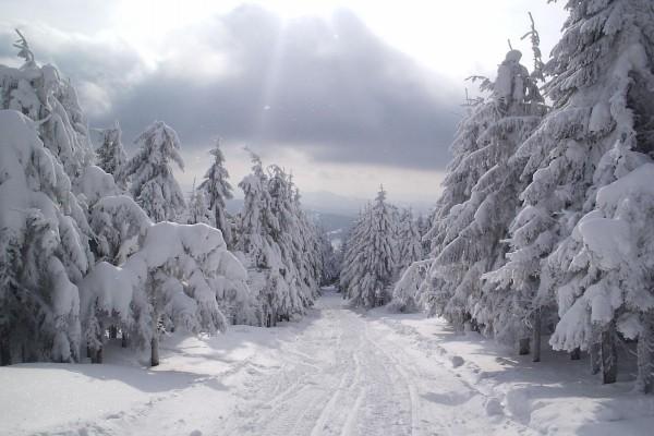 Nieve cayendo sobre el paisaje nevado