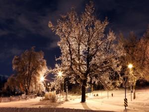 Postal: Señales de tráfico y luces en la nieve