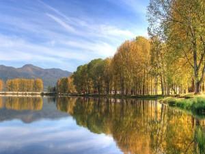 Árboles otoñales junto al lago