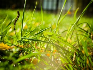 Briznas verdes brillando al sol