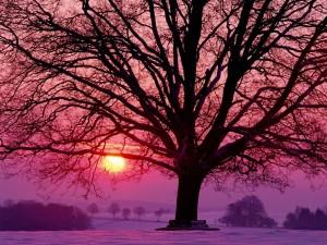 El sol del atardecer y un gran árbol en la nieve