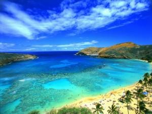 Vista aérea de la playa y las palmeras