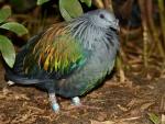 Un ave gris con algunas plumas de colores