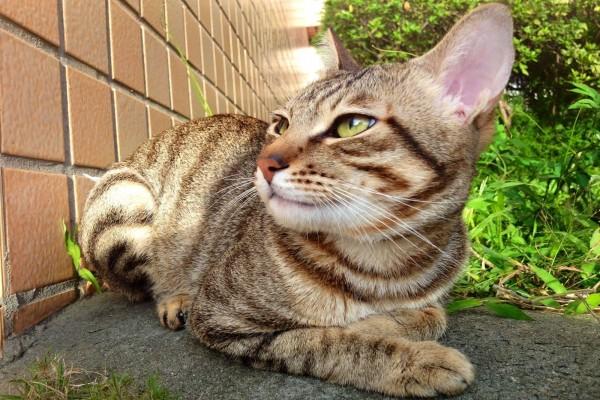 Un gato mirando hacia la pared