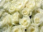 Un gran numero de rosas blancas