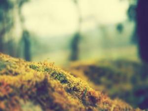 Pequeñas hierbas amarillas y verdes
