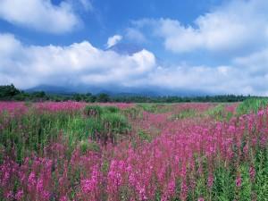 Un campo verde y lila