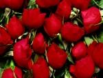 Rosas rojas sin tallo