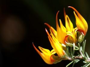 Curiosa flor con pétalos amarillos