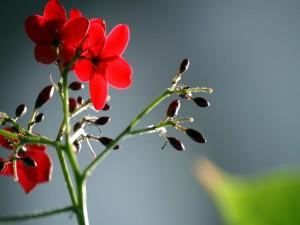 Postal: Rama con brotes y flores rojas