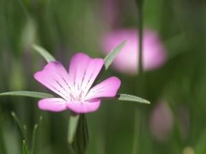 Una bonita flor en un tallo con finos pelos