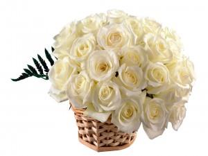 Postal: Cesta con unas preciosas rosas blancas