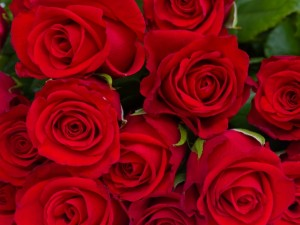 Postal: Varias rosas rojas