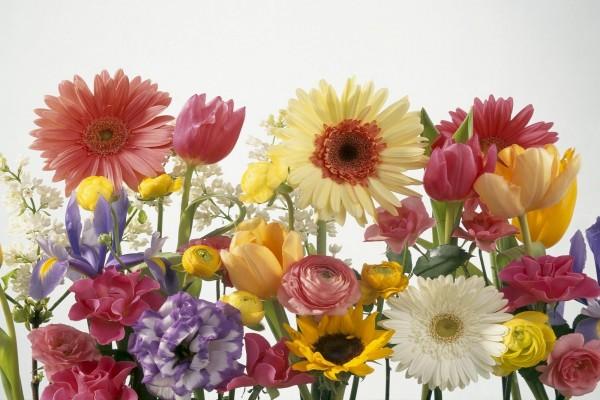 Gran variedad de flores