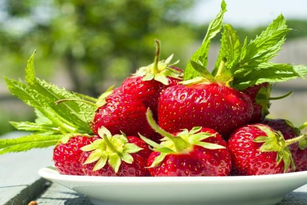 Fresas frescas en un plato