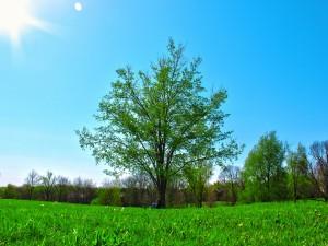 Postal: Hombre descansando junto a un árbol
