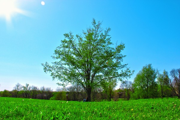 Hombre descansando junto a un árbol