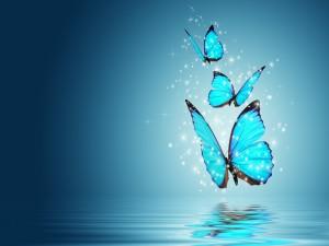 Tres mariposas azules sobre el agua