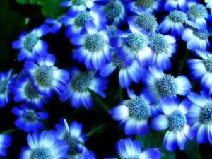 Postal: Flores de color blanco y azul