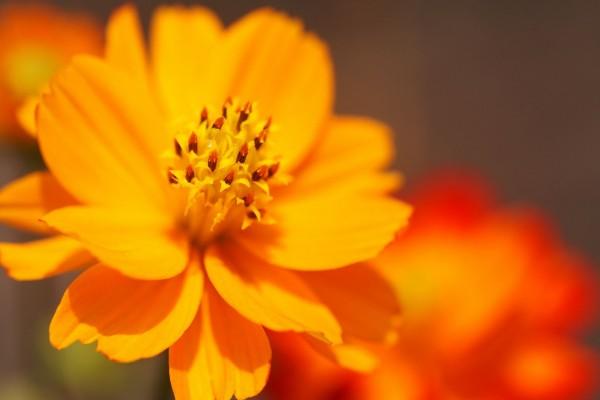 Los pétalos y estambres de una flor