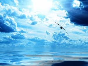 Ave surcando el cielo