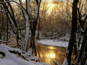 Árboles nevados en las dos orillas del río