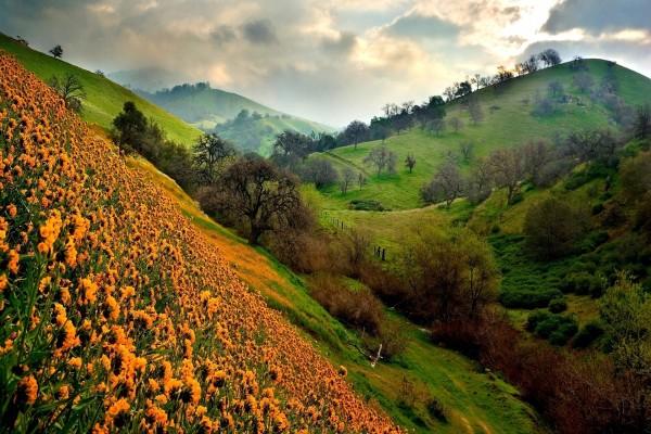 Flores en la ladera de la montaña