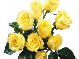 Rosas amarillas con tallo y hojas