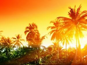 El sol detrás de las palmeras