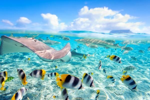 Variedad de peces en el mar