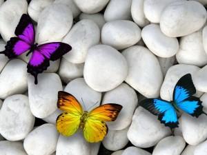 Postal: Piedras blancas y coloridas mariposas