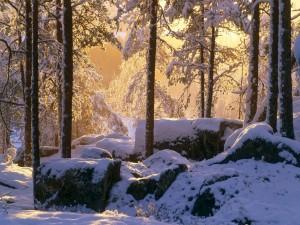 La luz del sol entre los árboles nevados