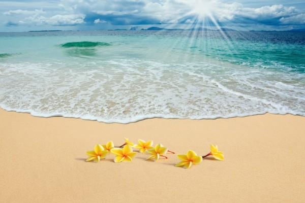 Bellas flores amarillas en la arena